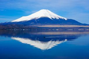 オオバンの泳ぐ山中湖畔の木道から富士山(逆さ富士)の写真素材 [FYI04485295]