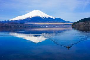 オオバンの泳ぐ山中湖畔の木道から富士山(逆さ富士)の写真素材 [FYI04485296]