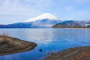 オオバンの泳ぐ山中湖畔から富士山の写真素材 [FYI04485328]