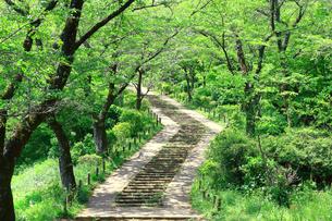 神奈川県 新緑の弘法山公園の階段の写真素材 [FYI04485625]