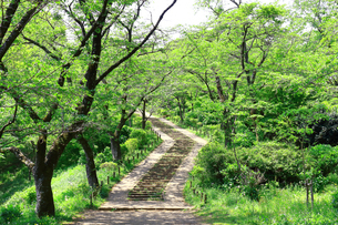 神奈川県 新緑の弘法山公園の階段の写真素材 [FYI04485626]