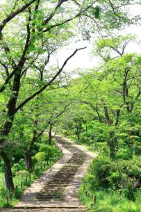 神奈川県 新緑の弘法山公園の階段の写真素材 [FYI04485627]