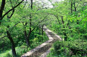 神奈川県 新緑の弘法山公園の階段の写真素材 [FYI04485628]