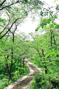 神奈川県 新緑の弘法山公園の階段の写真素材 [FYI04485629]