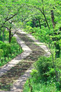 神奈川県 新緑の弘法山公園の階段の写真素材 [FYI04485630]