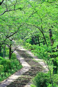 神奈川県 新緑の弘法山公園の階段の写真素材 [FYI04485631]
