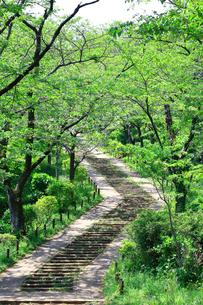神奈川県 新緑の弘法山公園の階段の写真素材 [FYI04485632]