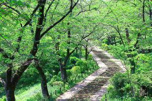 神奈川県 新緑の弘法山公園の階段の写真素材 [FYI04485633]