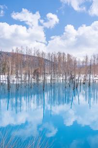 雪解けの青い池の写真素材 [FYI04485634]