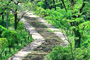 神奈川県 新緑の弘法山公園の階段の写真素材 [FYI04485635]