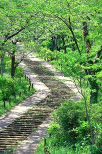 神奈川県 新緑の弘法山公園の階段の写真素材 [FYI04485636]