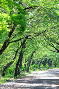 神奈川県 新緑の弘法山の写真素材 [FYI04485638]