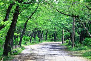 神奈川県 新緑の弘法山の写真素材 [FYI04485643]