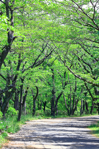 神奈川県 新緑の弘法山の写真素材 [FYI04485646]