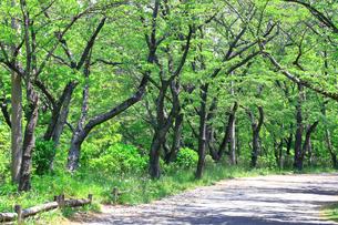 神奈川県 新緑の弘法山の写真素材 [FYI04485647]