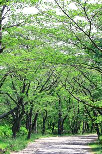 神奈川県 新緑の弘法山の写真素材 [FYI04485649]