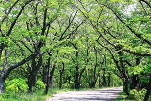 神奈川県 新緑の弘法山の写真素材 [FYI04485650]