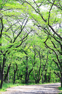 神奈川県 新緑の弘法山の写真素材 [FYI04485653]