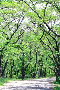 神奈川県 新緑の弘法山の写真素材 [FYI04485654]