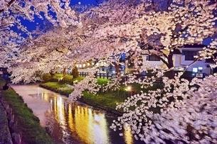 新河岸川の桜並木の写真素材 [FYI04485884]
