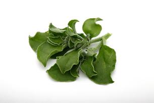 アイスプラント, 葉物野菜の写真素材 [FYI04485888]