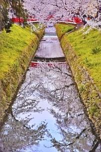 唐沢川桜堤の写真素材 [FYI04485900]