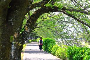 新緑の並木トンネルを歩く女性の写真素材 [FYI04485950]