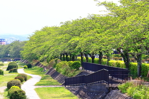 神奈川県 新緑の水無川の写真素材 [FYI04485971]