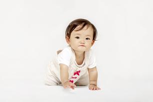 白背景の前でハイハイするカメラ目線の女の子の赤ちゃんの写真素材 [FYI04485993]