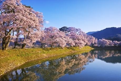 六道の堤の桜の写真素材 [FYI04486026]