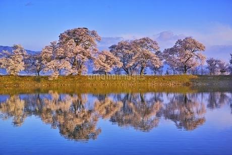 六道の堤の桜の写真素材 [FYI04486027]