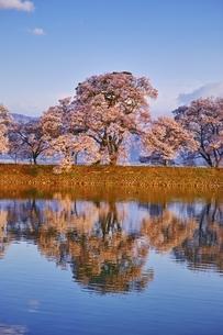 六道の堤の桜の写真素材 [FYI04486031]