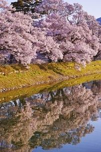 六道の堤の桜の写真素材 [FYI04486032]