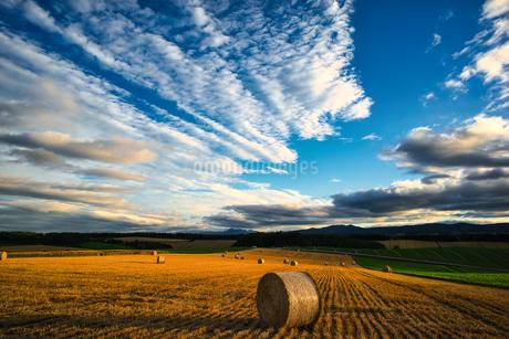 夏の美瑛 麦稈ロールの丘の写真素材 [FYI04486161]