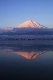 山中湖から眺める紅富士 日本100名山冬の富士山の写真素材 [FYI04486242]