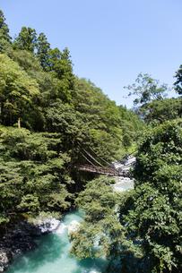 緑に囲まれた祖谷のかずら橋の写真素材 [FYI04486294]