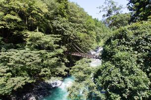 緑に囲まれた祖谷のかずら橋の写真素材 [FYI04486295]