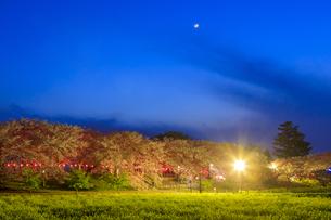 権現堂桜堤の桜と菜の花の写真素材 [FYI04486341]