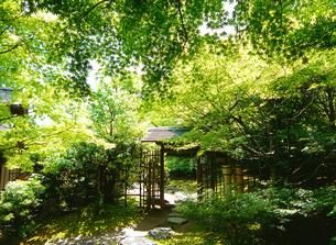 新緑の白鳥庭園の写真素材の写真素材 [FYI04486423]