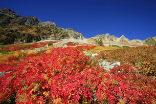 北アルプス穂高岳の紅葉 左の山は奥穂高岳と右側が涸沢岳の写真素材 [FYI04486449]