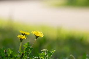 江南フラワーパークの花素材_07の写真素材 [FYI04486568]