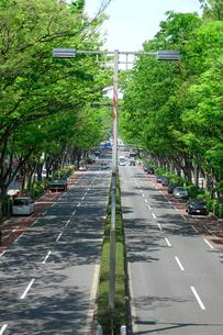 表参道 新緑のケヤキ並木の写真素材 [FYI04486597]