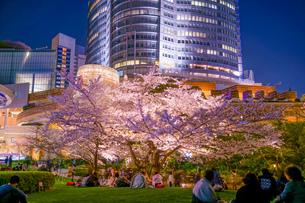 毛利庭園の夜桜と六本木ヒルズの写真素材 [FYI04486882]