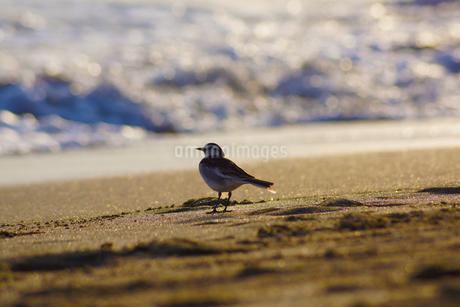 海を眺める鳥の写真素材 [FYI04486911]