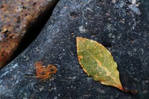 落ち葉と敷石の抽象的な静物写真の写真素材 [FYI04486973]