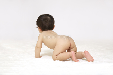 白背景の前でハイハイする赤ちゃんの後ろ姿の写真素材 [FYI04487100]