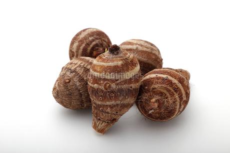 里芋,白い背景で隔離の写真素材 [FYI04487119]