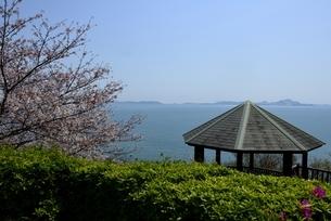 東御崎展望台,満開の桜と瀬戸内海,播磨灘の写真素材 [FYI04487178]