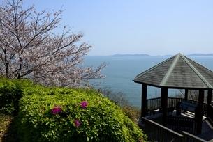 東御崎展望台,満開の桜と瀬戸内海,播磨灘の写真素材 [FYI04487179]