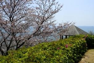 東御崎展望台,満開の桜と瀬戸内海,播磨灘の写真素材 [FYI04487180]